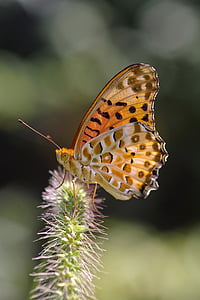 brown and black butterfly perched on green plant at daytime