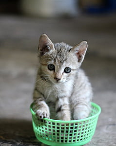 kitten in green bowl