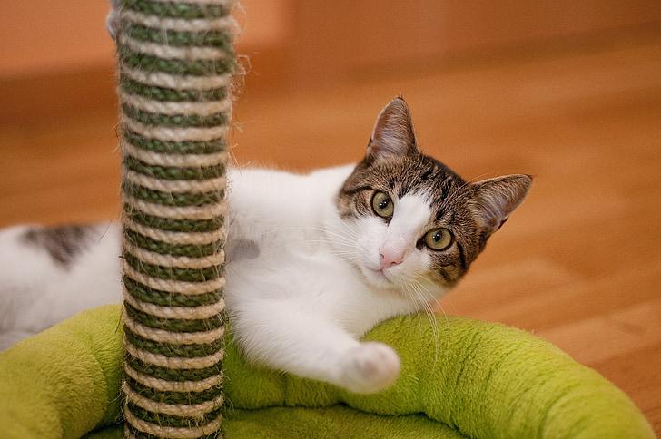tabby cat lying on pet bed