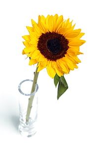 sunflower with clear glass vase