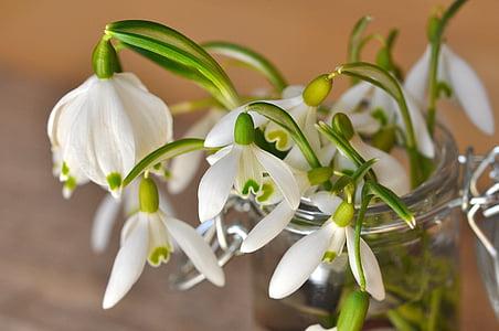white flowers in vase