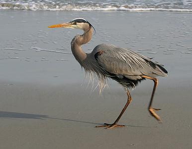 gray heron on shore during daytime