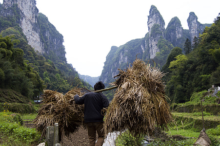 man standing while carrying hay shoulder pole