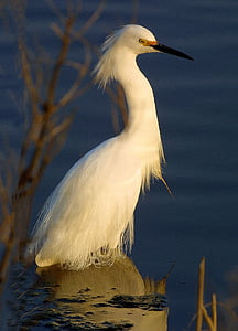 white Egret bird on body on water