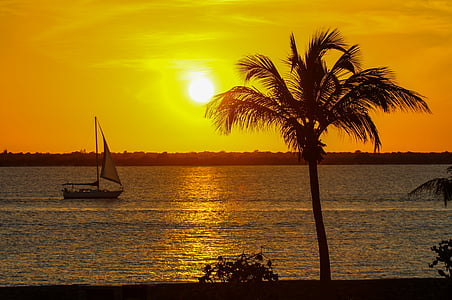 silhouette of palm tree near seashore and sailboat on calm body of water during golden hour