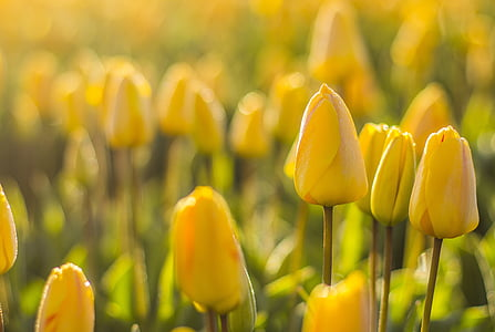 macro short photography of yellow flowers