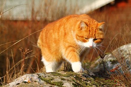 tilt shift lens photography of orange cat