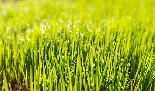 close up photography of grass with dew