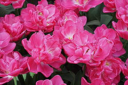 bed of pink petaled flower