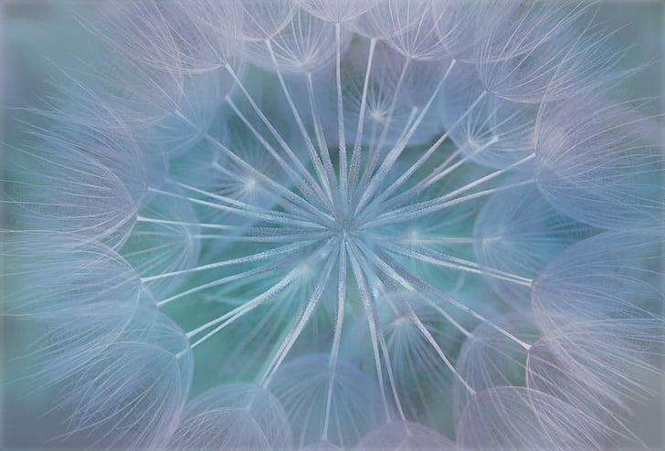 Royalty Free Photo White Dandelion Wallpaper Pickpik