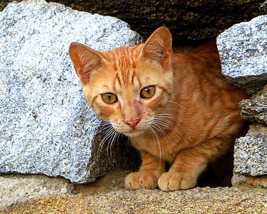 orange tabby cat between rocks