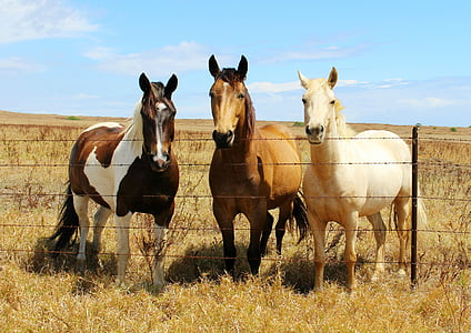 three assorted-color horse beside the fence