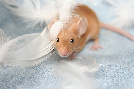 brown mice surrounded by white feathers