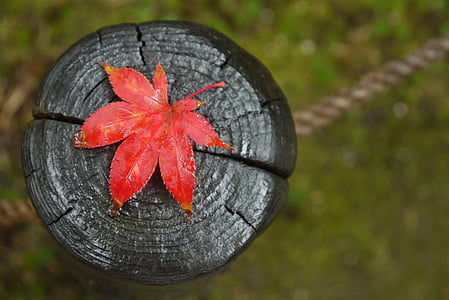 red leaf on black wooden surface