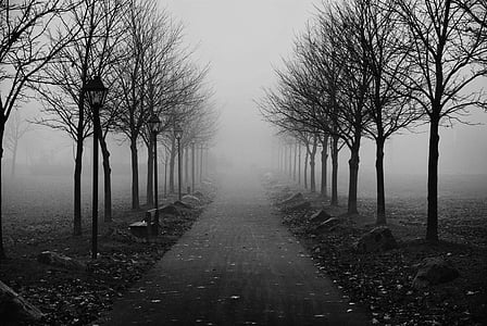 grayscale photo of pathway between bare trees surrounded by fogs