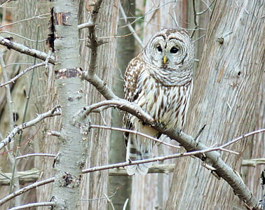 brown and white owl on tree branch