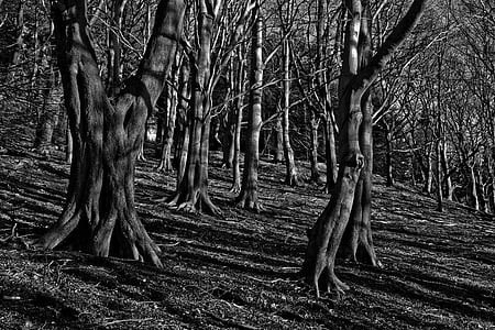 grayscale photography of bare trees