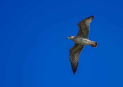 gray bird flying under blue sky