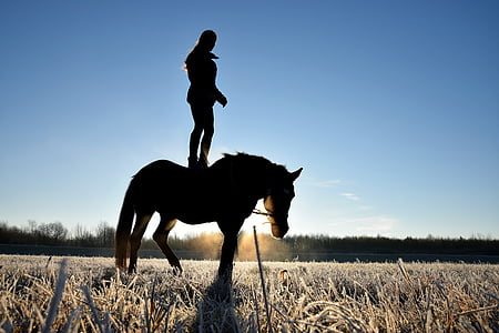 person standing on the back of horse