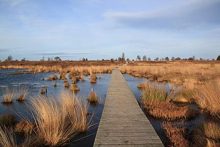 brown wooden board walk on body of water
