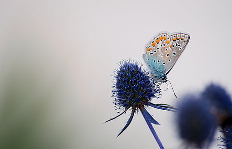 blue and orange butterfly perched on blue flower at daytime
