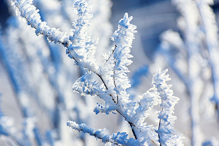 selective focus photography of frosted tree branch