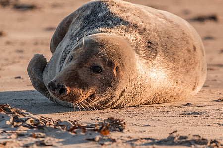 brown seal laying on ground