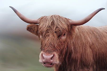 selective photo of brown cattle