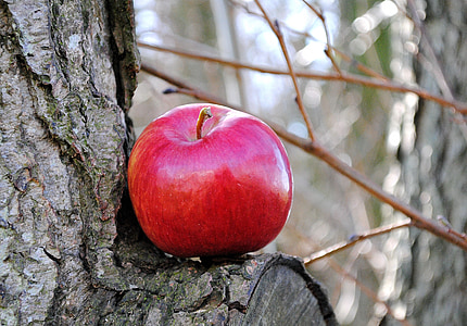 red apple on wood tree