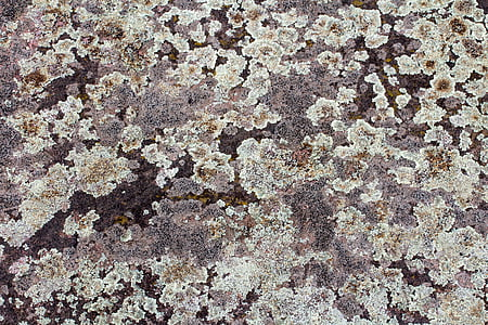 background, texture, wall, weave, structure, wattle