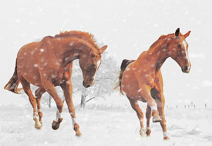 two brown horses during snow painting