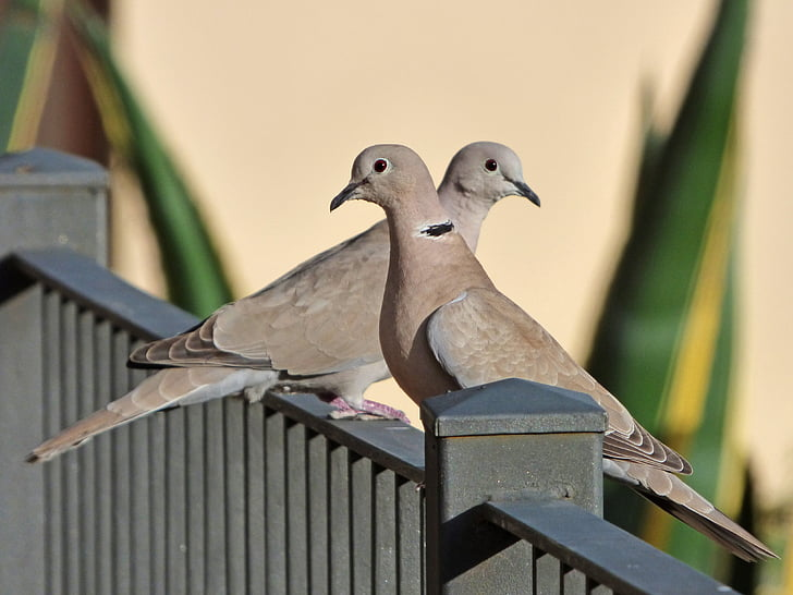 two gray pigeons on gray railings at daytime