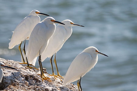 four white long-beak birds on rock