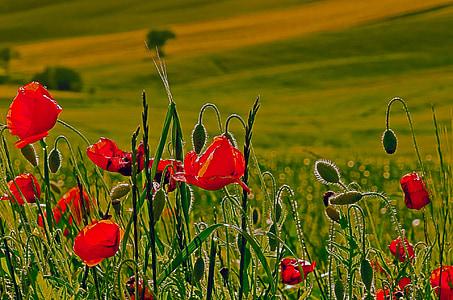 red flower on grass field