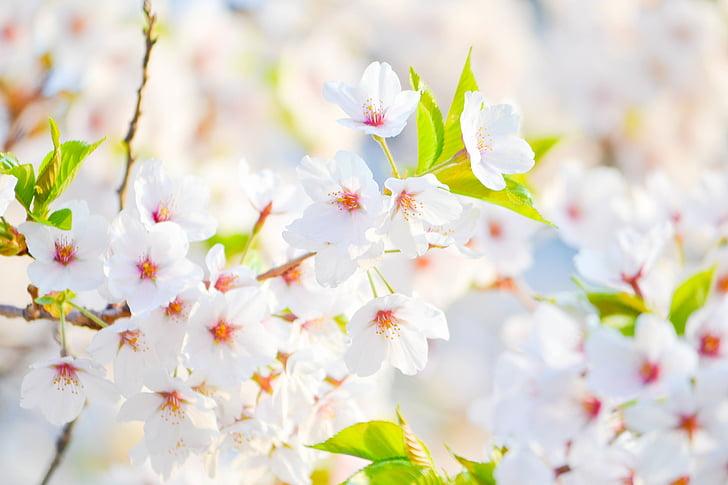 Royalty free photo white jasmine flower in vase pickpik mightylinksfo