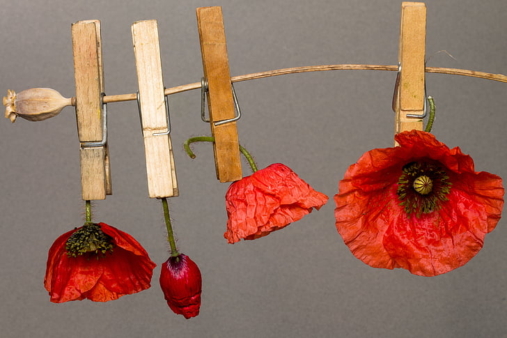 photo of clipped dried poppy flowers