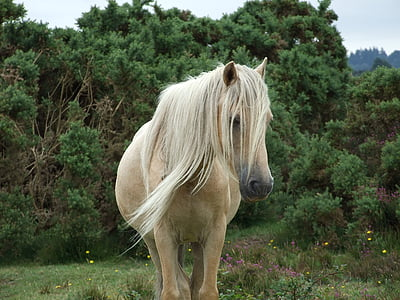 white horse standing on grass field
