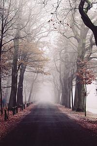 photo of hallway near trees