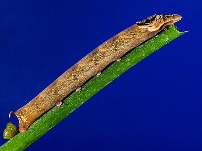brown caterpillar on green branch