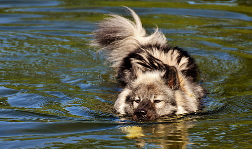 long-coated black and white dog swimming on water at daytime