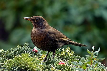 brown bird on green leafed plants
