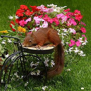 brown squirrel beside petaled flowers