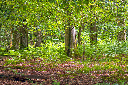 green foliage trees with brown soil