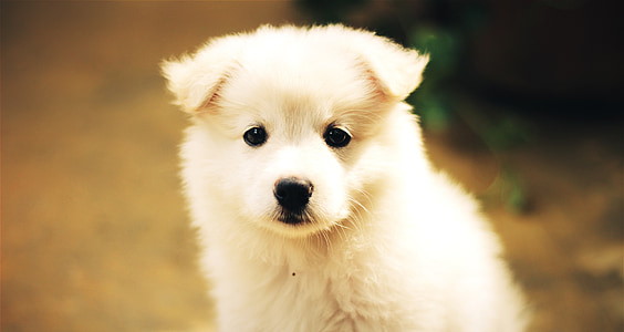 selective focus photography of white puppy