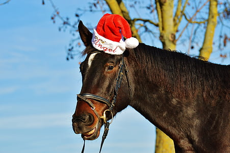 brown horse wearing red and white santa hat at daytime