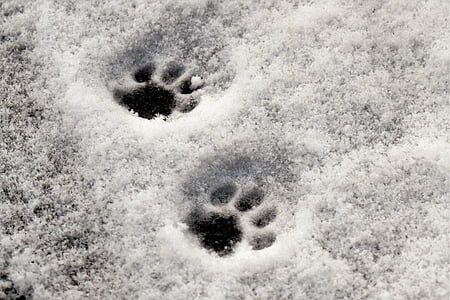 two paw prints on snowy floor