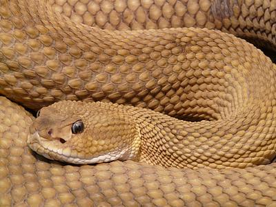 closeup photo of brown snake
