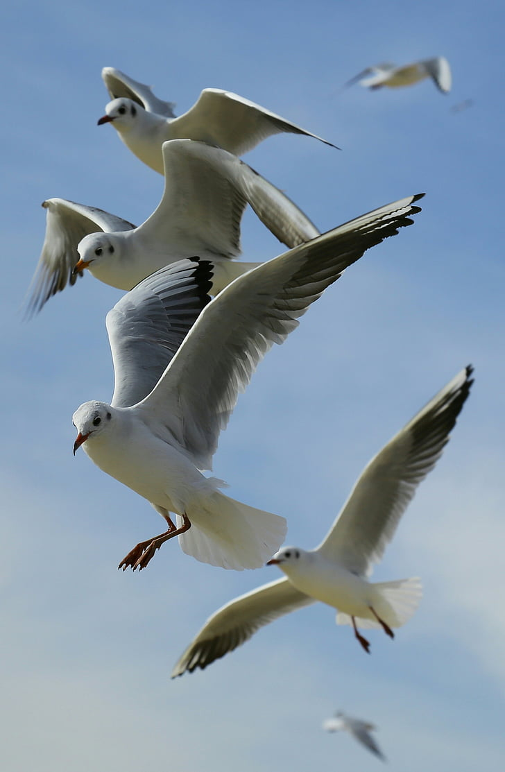 macro photography of flock of seagulls