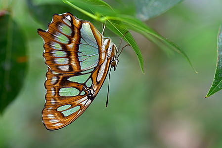 selective focus photography of brown and white swallowtail butterfly perched under green leaf at daytime