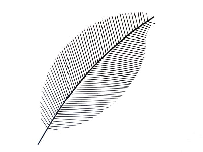 photo of leaf illustration